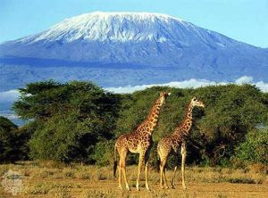 Train to Climb Kilimanjaro