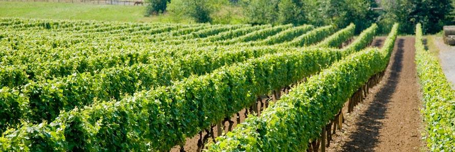 Chaberton Estate Winery via http://www.chabertonwinery.com/